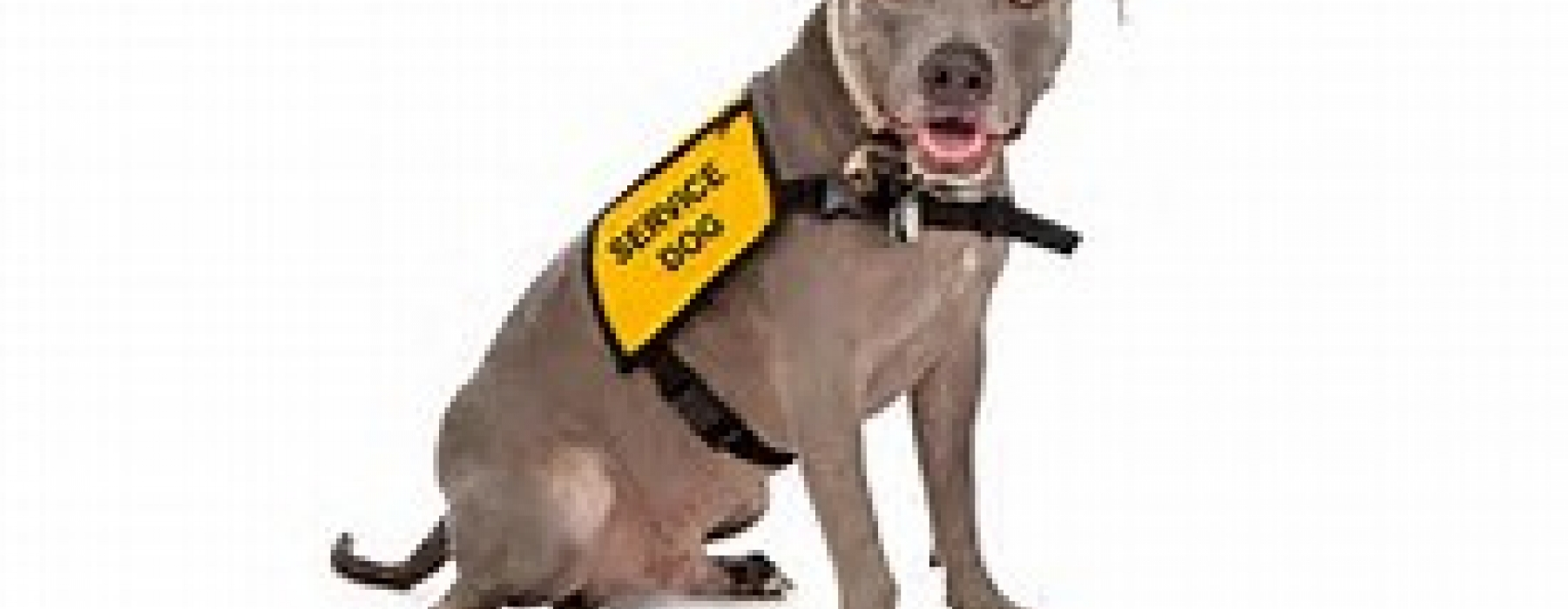 Service Dog Regulations